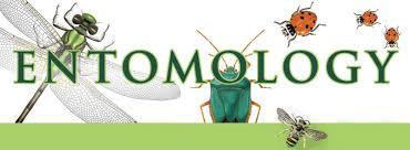 Top Entomology Schools to get into